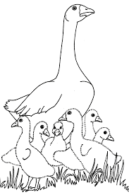 Baby Goose Colouring Pages Sketch Coloring Page