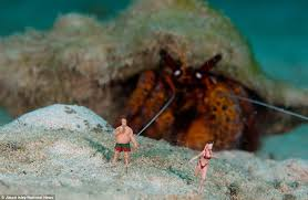 Halloween Hermit Crab Care by Life U0027s A Beach Toy Figures Mingle With The Fish In Hilarious