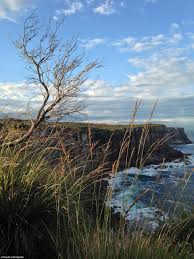 The Spectacular Views From Cliff Tops Of North Head Impressed Famous Photographer