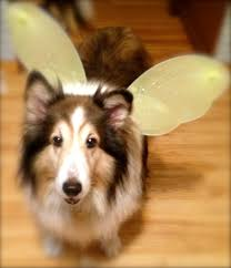 Halloween Express Rochester Minnesota by Lost Shelties Mn No Dog About It Blog