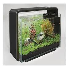 vente aquarium pas cher poisson d eau douce vrac it