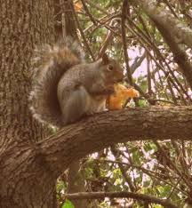 how to protect garden bulbs from squirrels dengarden