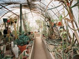 Unique Botanical Gardens Palm Springs Moorten Botanical Garden