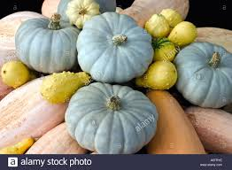 Types Of Pumpkins And Squash by Ornamental Pumpkin Stock Photos U0026 Ornamental Pumpkin Stock Images