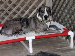 Great Danes Dog Bed 38x55 X Raised Bed PVC Cot 11 CANVAS