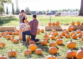 Pumpkin Patch Fresno Ca First News by 43 Best Proposing To Her Great Proposal Ideas Romantic Proposals