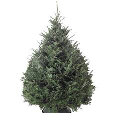 Types Of Real Christmas Trees