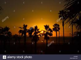 California Beach Sunset With Palm Trees Row Of The Sun Peeking Through