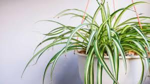 10 zimmerpflanzen die mit wenig licht auskommen
