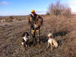 Best Hunting Dogs That Dont Shed by Labradoodles