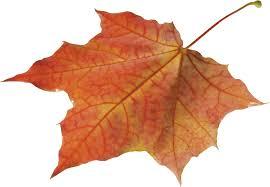 Autumn Leaves Solo Left