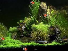 fond d écran animé aquarium