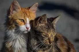 wenn deine katze im sterben liegt katzenverhaltensberatung
