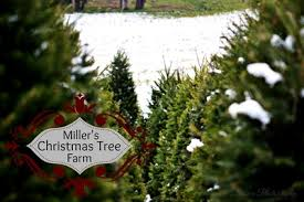 Christmas Tree Hill Shops Lancaster Pa by Miller U0027s Christmas Tree Farm Miller U0027s Christmas Tree Farm About