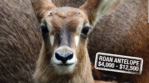 Mainly Found Roaming The Savannahs Of West And Central Africa Roan Antelope Canlt