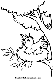 Free Bird Nest And Egg Coloring Page TheLittleLadybirdcom