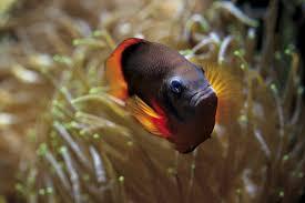 grand aquarium de malo malo grand aquarium malo ille et vilaine