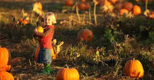 Wheatland California Pumpkin Patch by 10 Sacramento Area Pumpkin Patches Sactown Magazine