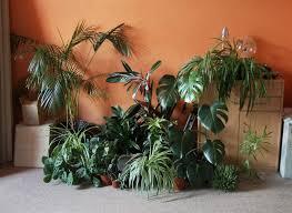 pflanzenecke und blumenständer majas pflanzenblog