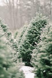 Green Mini Fibre Optic Christmas Tree by Dulls Christmas Tree Farm Christmas Ideas