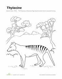 Extinct Animals Coloring Page Thylacine