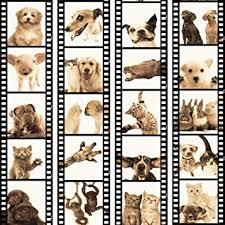wandaufkleber wohnzimmer lustige tier hund katze kaninchen