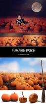 Best Pumpkin Patch Des Moines pumpkin patch digital backdrops u0026 overlays for photographers very