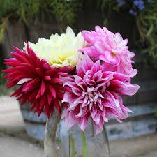 gardenpostnz bulbs and plants fom nz s premier mail order