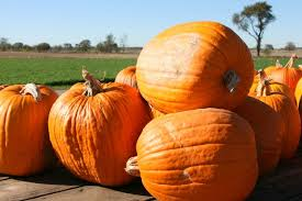 Pumpkin Festival Ohio by Circleville Pumpkin Show 50 Cultural Experiences To Try In 2014