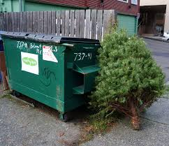 Nyc Christmas Tree Disposal 2014 by Living On Earth Renting Trees Keeps The Christmas Spirit Alive