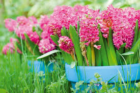most fragrant perennials for the pacific northwest gardens