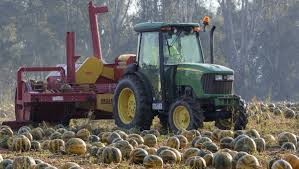 Styrian Pumpkin Seed Oil Prostate by Seeds A Healthy Industry The Border Mail