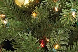 Christmas Tree Species Usa by Fresh Cut U0026 Live Christmas Trees The Home Depot Canada