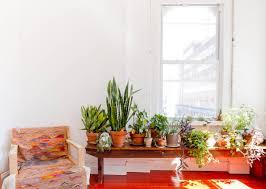 welche zimmerpflanzen sind für haustiere giftig