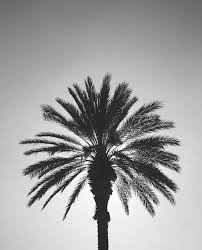 Beautiful Black And White California Filter Gray Los Angeles Palm