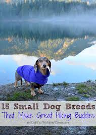 Large Dogs That Dont Shed Fur by 15 Small Dogs Breeds That Make Great Hiking Buddies