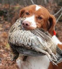 best kind of hunting dog in the world words pinterest dog