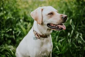 Dogs That Dont Shed And Smell by Must Have Products To Mask Pet Odor Petlife
