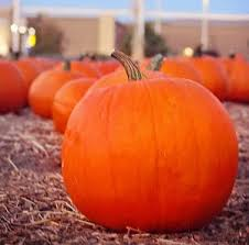 South Reno Pumpkin Patch by Toll House Pumpkin Patch And Christmas Trees Washoe