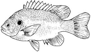 Bass Coloring Pages 20