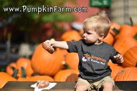Pumpkin Farm Illinois Best by Bengtson U0027s Pumpkin Fest 430 Photos U0026 131 Reviews Festivals