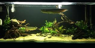 Aquascaping Forum Favourites By Very Nice Triangular Appartment ... An Inrmediate Guide To Aquascaping Aquaec Tropical Fish Most Beautiful Aquascapes Undwater Landscapes Youtube 30 Most Amazing Aquascapes And Planted Fish Tank Ever 1 The Beautiful Luxury Aquaria Creating With Earth Water Photo Planted Axolotl Aquascape Tank Caudataorg 20 Of Places On Planet This Is Why You Can Forum Favourites By Very Nice Triangular Appartment Nano Cube Aquascape Nature Aquarium Aquascaping Enrico A Collection Of Kristelvdakker Pearltrees