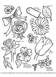 Botanical Flowers With Names Printables For Kids Free Word Search Puzzles Coloring Pages