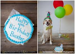 "We ve never celebrated Baxter s birthday before I wanted to a local ""pupcake"" for him this year and well…being a photographer used it as inspiration"