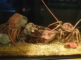 Do Hermit Crabs Shed Their Whole Body by Crustaceans U2013 Notes From A California Naturalist