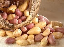 comment cuisiner des pommes de terre comment cuisiner la pomme de terre d hiver recettes