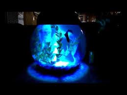 aqua culture 1 gallon globe bowl with led light 7 25 dia x 8 5 h