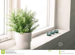 Best Plant For Bathroom Feng Shui by Bathroom Flowers And Plants Bathroom Trends 2017 2018