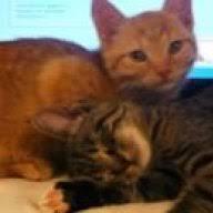 katze macht auf langflor teppich katzen forum das große