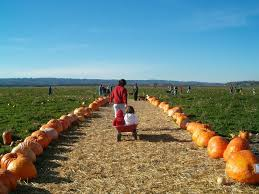 Tims Pumpkin Patch by Best Pumpkin Patches And Farms Near Seattle